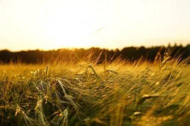 我国粮食生产连获丰收 专家:粮价上涨势头难持续