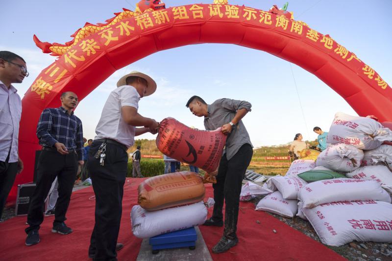 袁隆平第三代杂交水稻亩产破千公斤